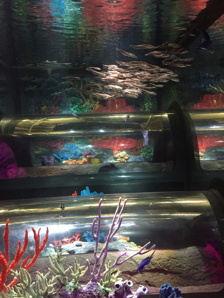 Sea Life Aquarium 4
