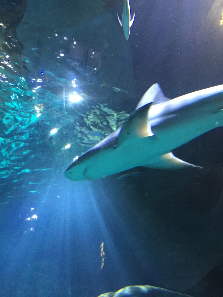 Sea Life Aquarium 3