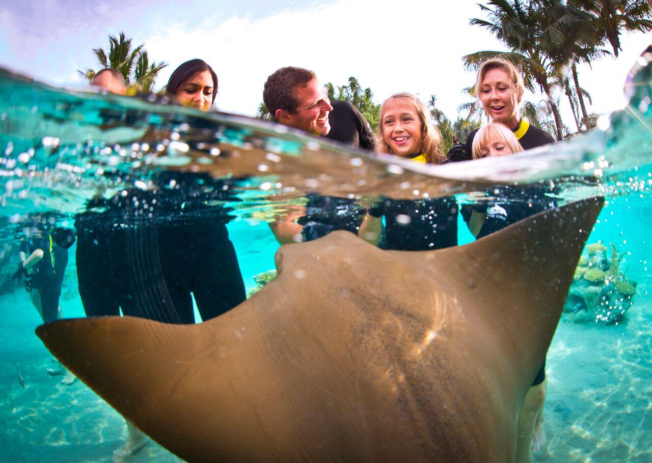 cfe127b97f85a Antes os visitantes já podiam ver os tubarões no parque, mas agora podem  nadar junto com 5 espécies diferentes.